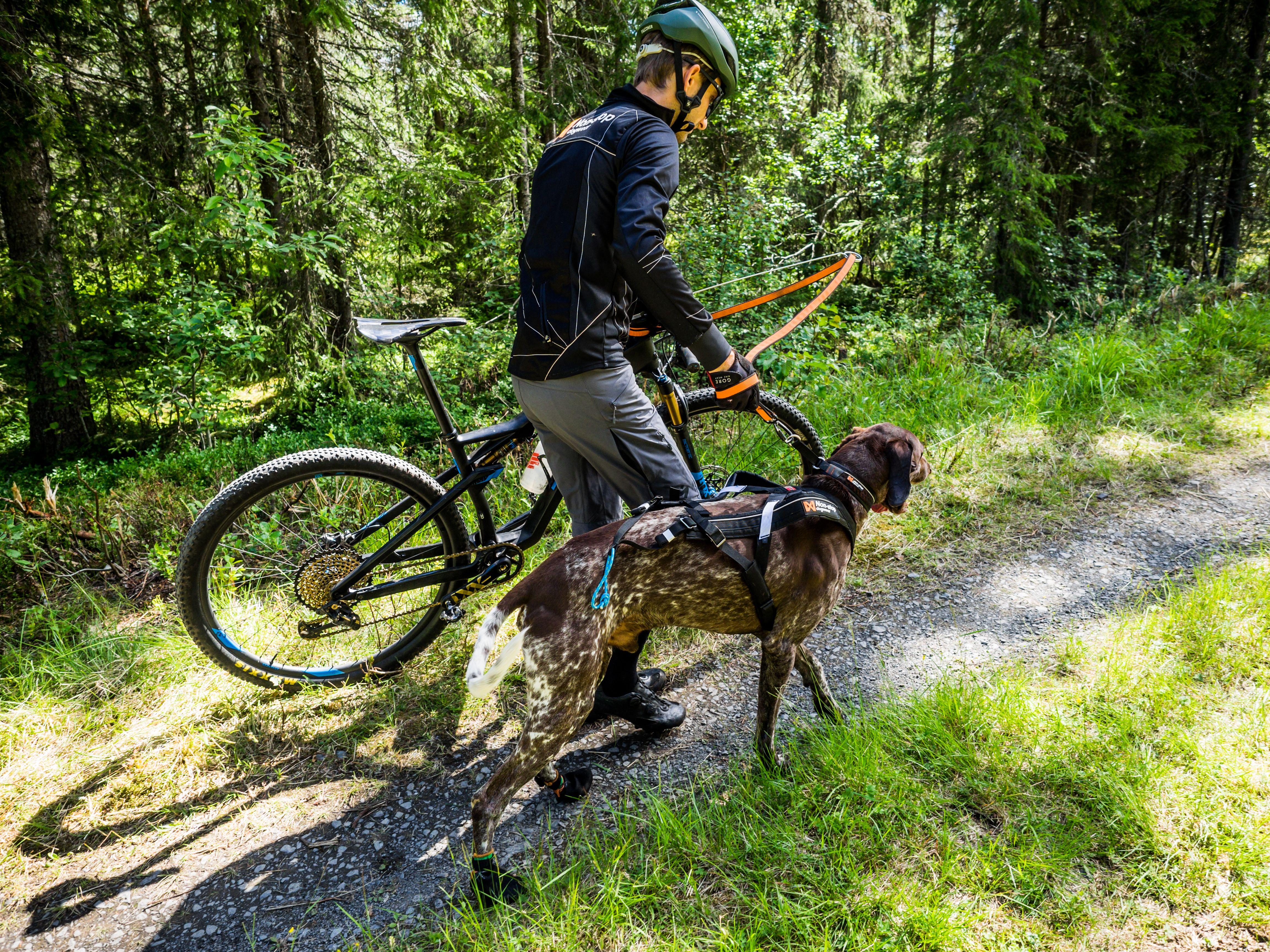 Bikejoring Go Next To