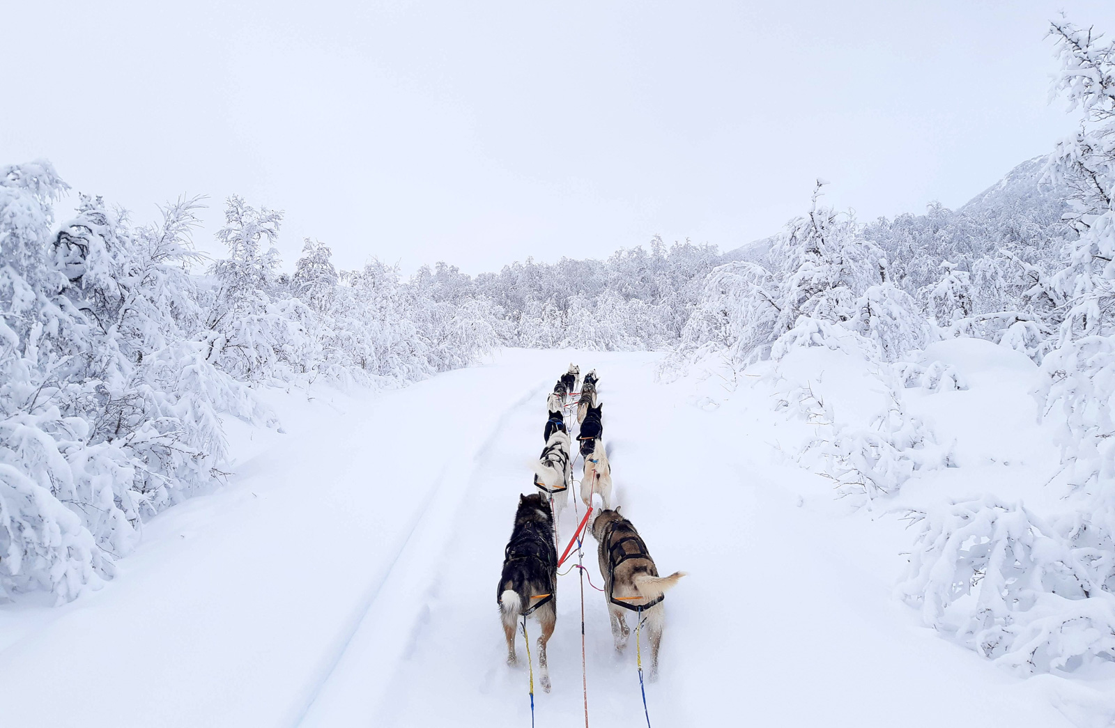 Magazine Nansen Stick Harness In Use, Mushing Cms